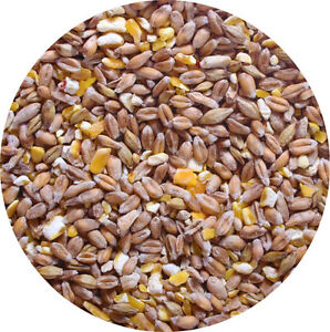 Mixed Corn 5kg POULTRY FEED Food A Great Food For Chicken Hen Duck Geese Etc