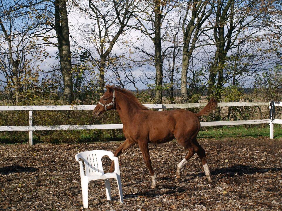 Hill Top Horses ApS