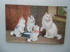 Ansichtskarte weiße Katzen um 1910 (F.E.D. Serie 115)