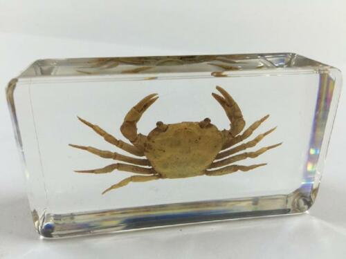 Crab square lucite resin Paperweights Specimens