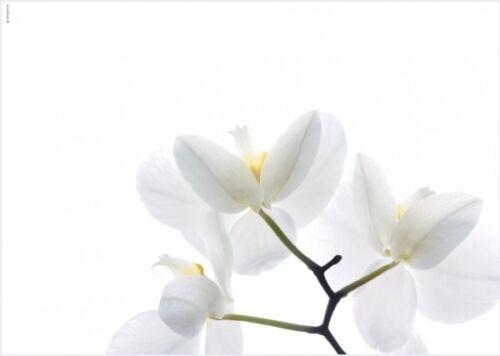 3 Tischsets décor White Orchid 45 cm x 32 cm