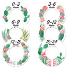 Baby Nursery Gender Neutral Closet Clothing Size 1.25 Inch (Pack of 6)