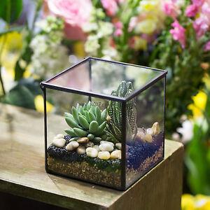 Image Is Loading Square Glass Geometric Terrarium Tabletop Succulent Plant  Terrarium