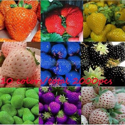 10 colors- 200/color Strawberry Seeds Red Black Blue Everbearing Fruit Plants