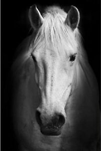 Framed-Print-White-Horse-Standing-in-the-Darkness-Picture-Poster-Animal-Art