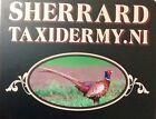 sherrardstaxidermy