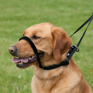 Black Dog Training Head Collar