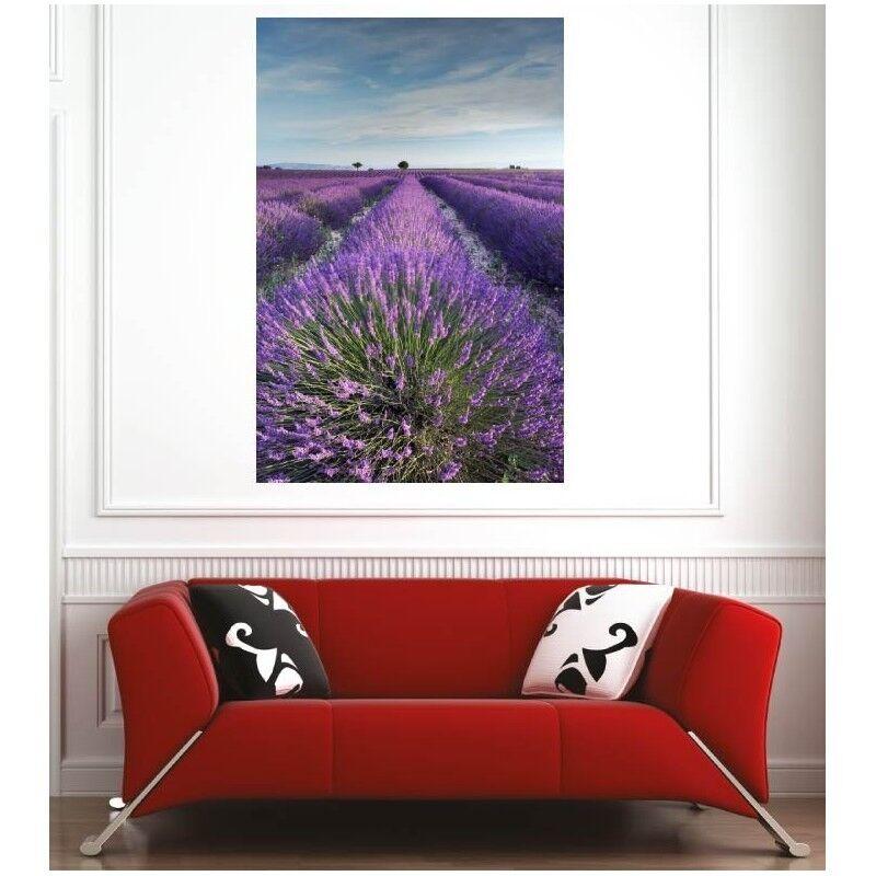 Plakat Plakat Feld Lavendel- 75336436