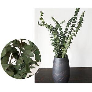 Am-10Pcs-Bouquet-Dried-Eucalyptus-Branches-Leaves-Flower-Arrangement-Home-Decor