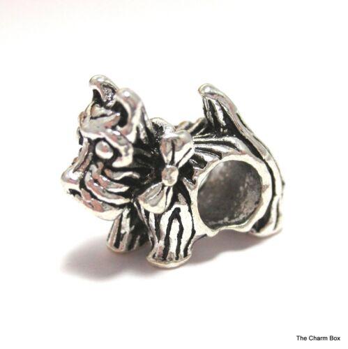 """/""""Gato Perro Terrier Escocés europeo encanto grano plateado plata"""