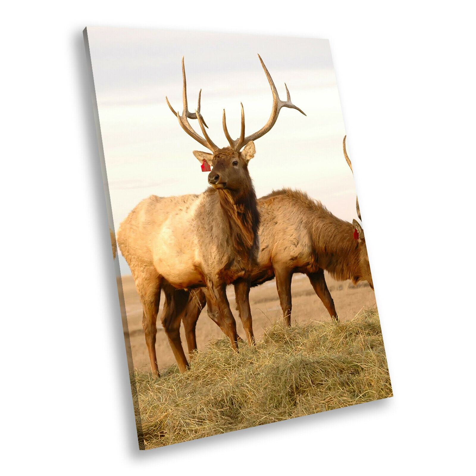 Stag Deer Grass braun  Portrait Animal Canvas Wall Art Large Picture Prints
