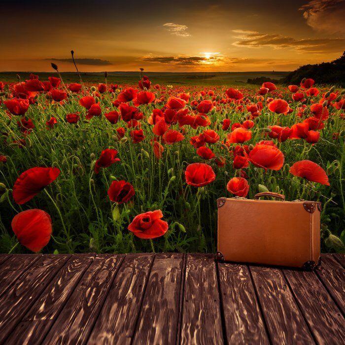Rote Blume Fototapete Sonnenuntergang Wohnzimmer Schlafzimmer Tapete ...