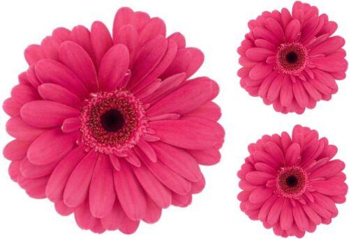 Set 3x sticker decal wall fridge children room decorate pink flower macbook
