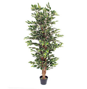 Image Is Loading Artificial 5ft 150cm Variegated Artificial Ficus Tree Large