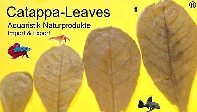 catappa-leaves