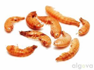 Crabes de Gammarus 12kg de tortues de nourriture Algova® Koi Goldfish