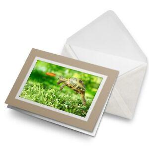 Greetings-Card-Biege-Tortoise-Turtle-Jumping-Frisbee-14390