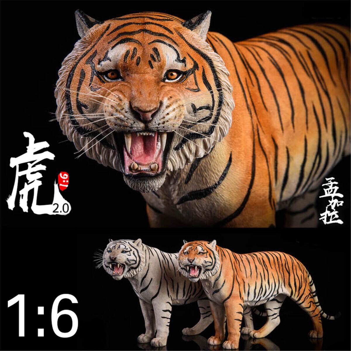 JxK 1 6 Bengal  Tiger cifra Roar 2.0 Version Animal modellololo Collector Decor giocattolo  prezzi bassi