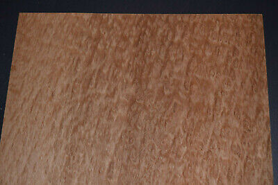 Eucalyptus Burl Raw Wood Veneer Sheets 11 x 20 inches 1//42nd thick    7659-28