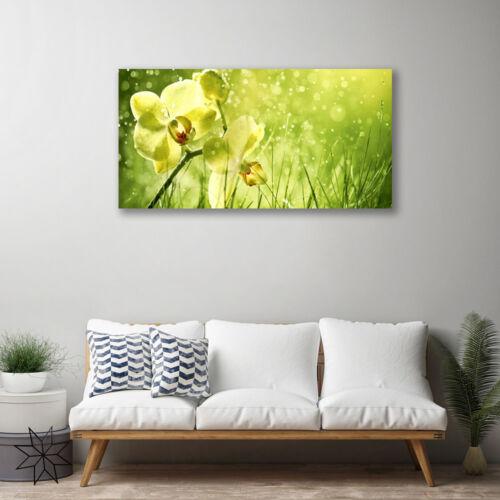Leinwand-Bilder 100x50 Wandbild Canvas Kunstdruck Gras Blumen Pflanzen