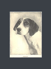 Rare Fox Hound Dog Drawing Print 1935 by Malcolm Nicholson 10 X 13 Matted