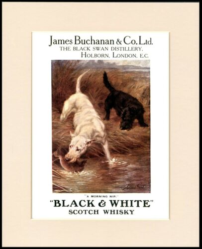ENGLISH BULL AND SCOTTISH TERRIER WHISKY ADVERT DOG PRINT MOUNTED READY TO FRAME