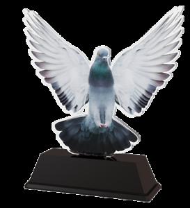 Pigeon Racing Acrylique trophée Free gravé Plaque 100 mm NOUVEAU et EXCLUSIF