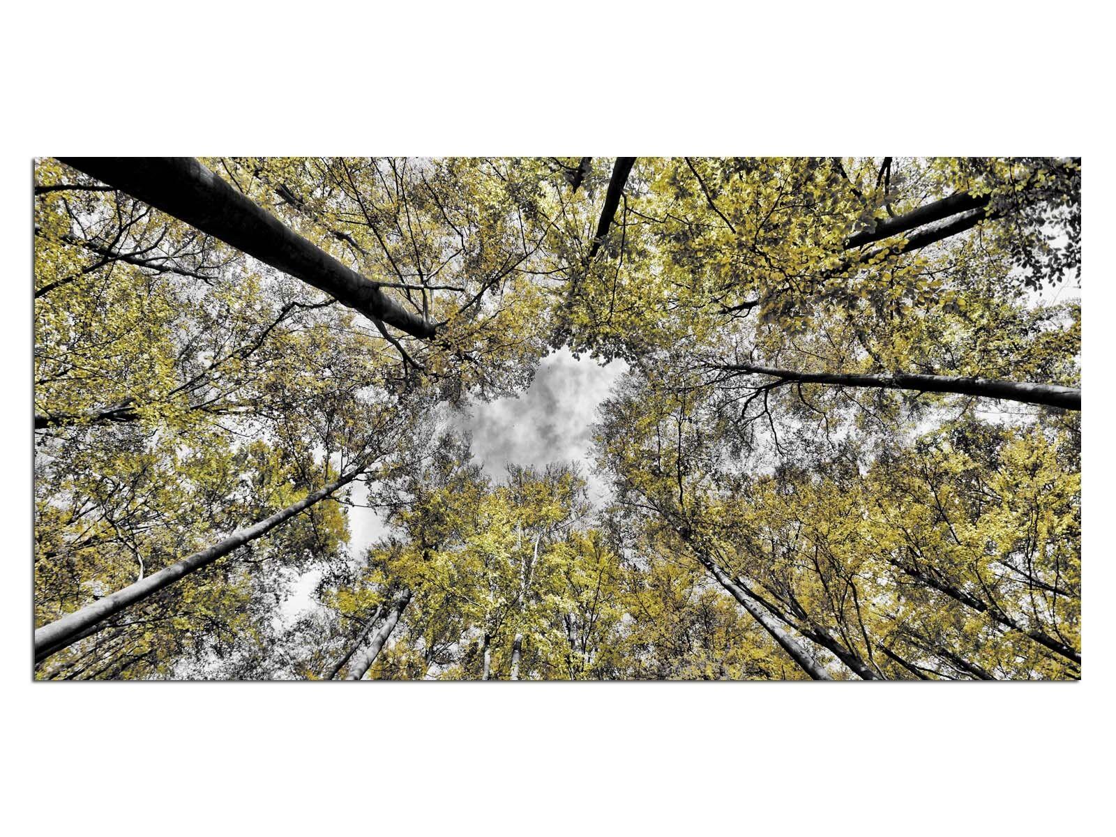 Deco De Vidrio Imagen eg4100500713 abedul árboles forestales verde Tamaño 39,37  X 19,68  Hd