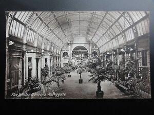 Yorkshire-Harrogate-THE-WINTER-GARDENS-Old-Postcard