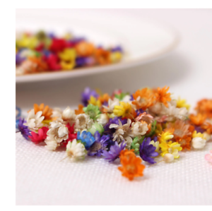 200pc Real Dried Flowers For DIY Art Craft Epoxy Resin Candle Making