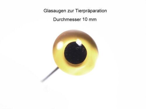 Gelb schwarz Tierpräparate Glasaugen Durchmesser 10 mm