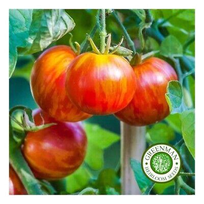 10 graines de tomate rare Coeur de Zebre Abricot heirloom tomato seeds méth.bio