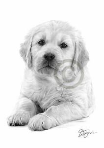 Dog Golden Retriever Puppy Pencil Drawing Print A4 Only Signed By