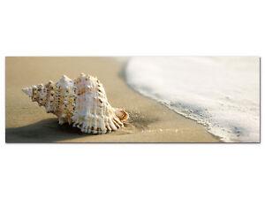 wandbilder glasbilder acrylglasbild f r wohnzimmer muschel sand wasser meer ebay. Black Bedroom Furniture Sets. Home Design Ideas