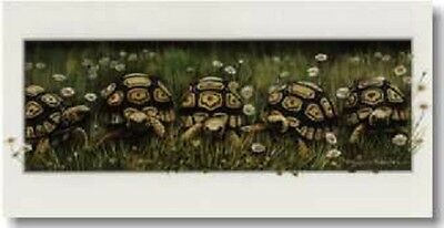 On Your Marks Tortoise blank greeting birthday card Pollyanna Pickering