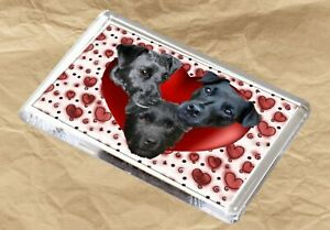 Patterdale-Terrier-Dog-Fridge-Magnet-77-x-51m-Birthday-Gift-Xmas-Stocking-Filler