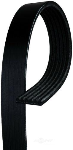 Serpentine Belt-Standard ACDelco Pro 6K620