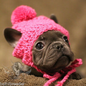 Details About Handmade Crochet Pet Clothes Small Dog Breed French Bulldog Hat Beanie Dress Up