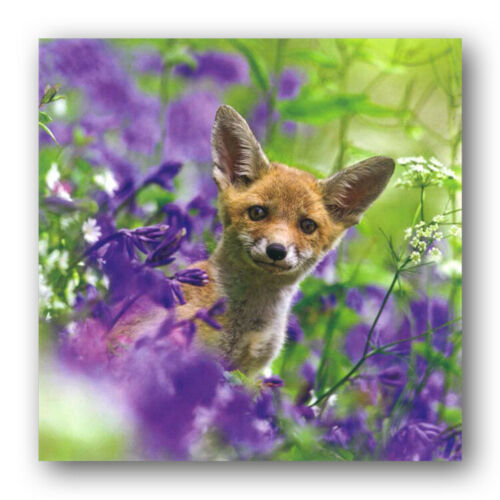 Woodland Trust Fox Cub in Bluebells Birthday Greetings Card Ref 289