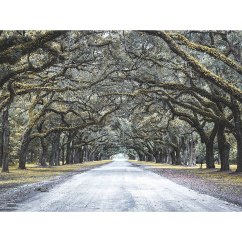 Cassell Tree Tunnel Road Large Canvas Wall Art Print