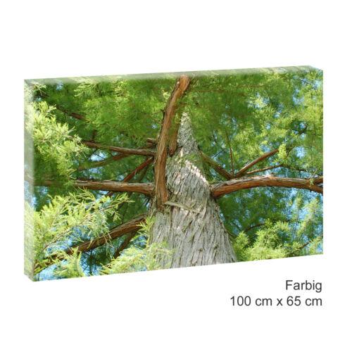Baum Bild auf Leinwand  Natur Wald Poster Wandbild Poster 100 cm*65 cm 460