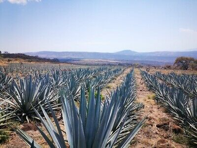En Venta Rancho de 482 hectareas por Amatitan