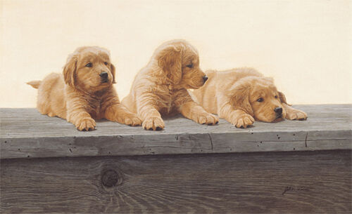 """/""""Golden retriever Puppies/"""" John Weiss Anniversary Giclee Canvas"""