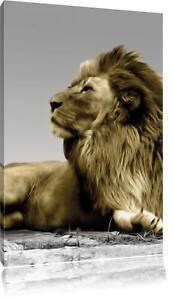 Löwin auf Baum schwarz//weiß Leinwandbild Wanddeko Kunstdruck