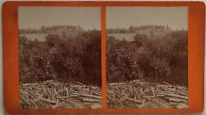 Paesaggio-Legno-Foto-Stereo-10x17-8-CM-Vintage-Albumina-c1890