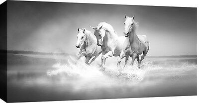 LARGE HORSES RUNNING ON SEA BOX CANVAS WALL ART PICTURE GREY 103x52 cm 3cm frame