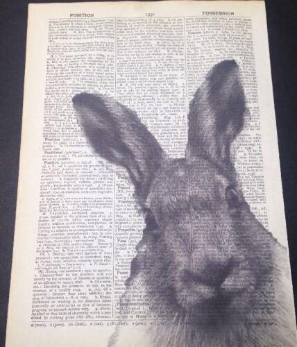Vintage Grau Hase Druck Original Antik Wörterbuch Seite Wandkunst Tiere