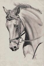 Horse - 30x20 Inch Canvas - Equestrian Framed Picture Print Horses Pencil Poster