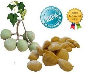 nuez-de-la-india-1-pack-of-12-seeds-100-Original-Fresh-Guaranteed-quema-grasa