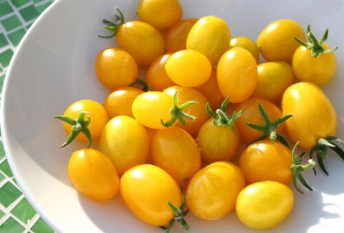 Tomate Ildi Gelb 120 Samen Gemüse Obst